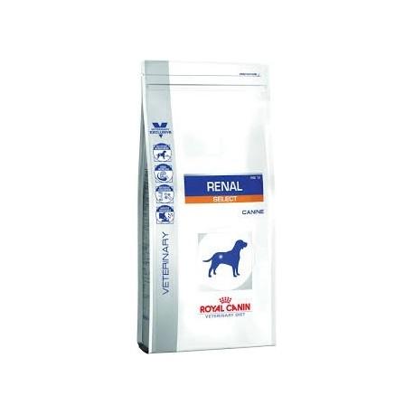 غذای خشک سگ بد غذا مبتلا به بیماری کلیوی با مشکلات دندانی